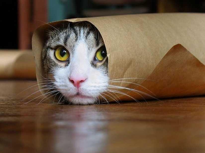 Kedi sahiplerinin hayatını kolaylaştıracak öneriler