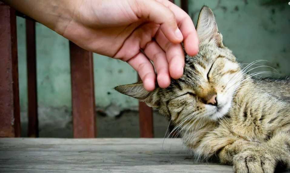 Kedinizi sevmek hoşuna gider