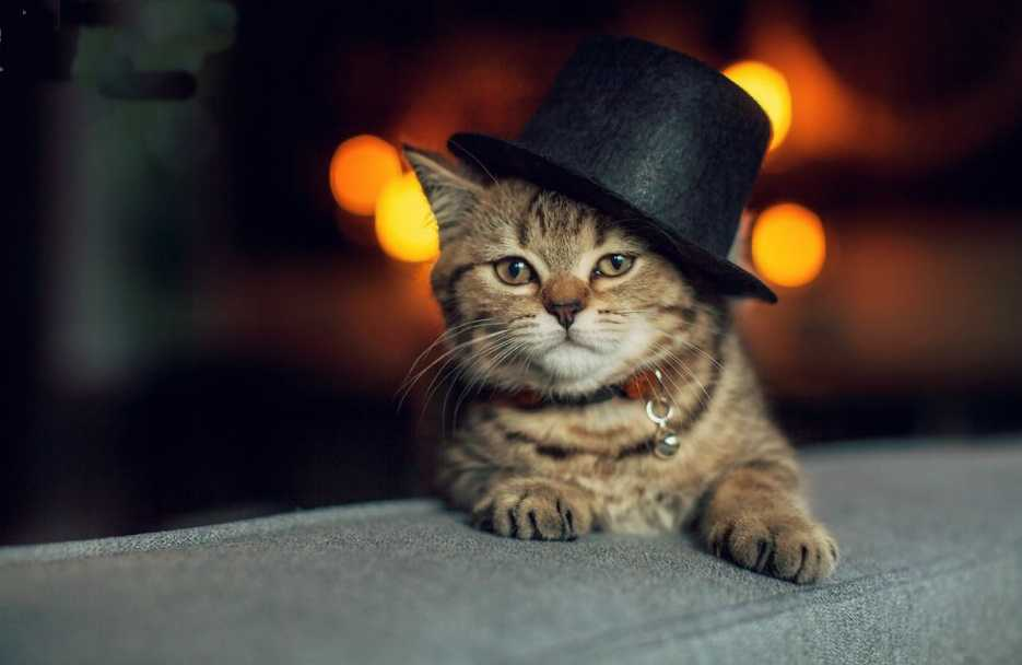 Alışkanlıklarını değiştirmek kedileri hasta eder
