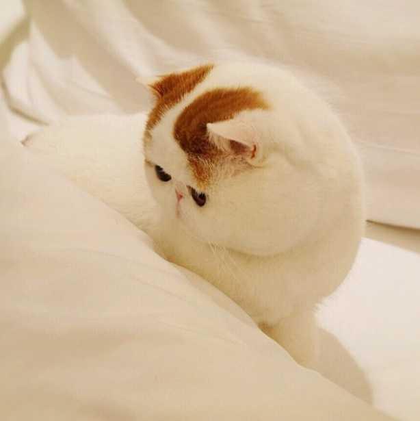 Kediler ilk olarak Çin'de evcilleştirildi