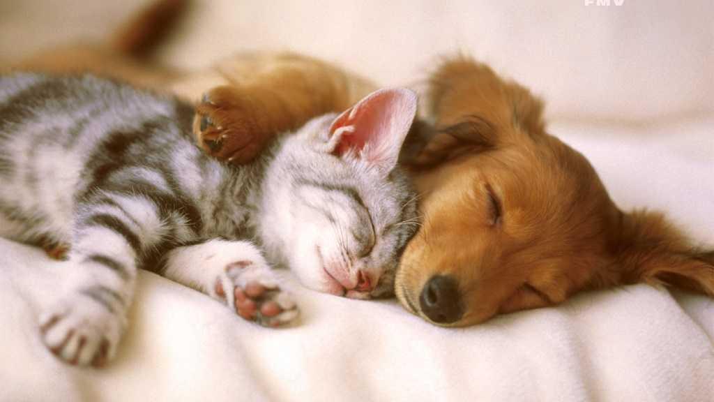 Kediler köpeklerle yaşayabilir