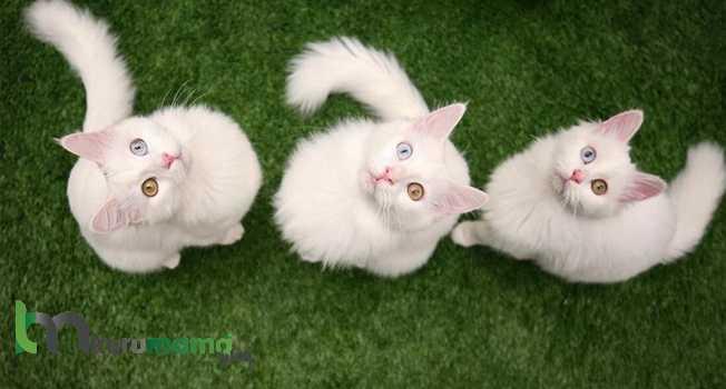 Kediler ne yer