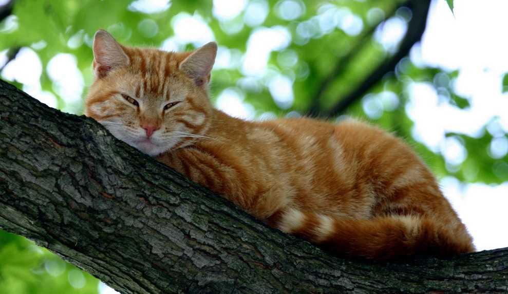 Kedilerde alerji nedenleri ve çözümü