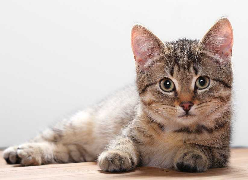 Kedinizi Mutlu Etmenin 5 Yolu