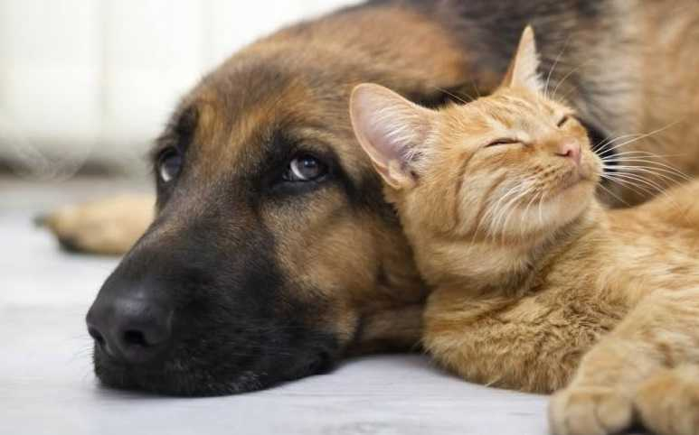 Kedilerin beyinleri köpeklerden daha karmaşıktır