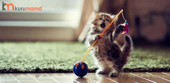 kedilerin en sevdiği şeyler