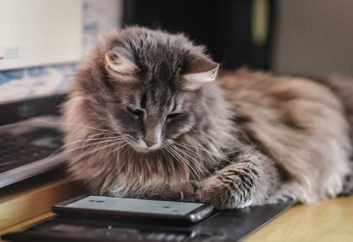 Kedilerin kısa süreli hafızaları 10 dakikadır