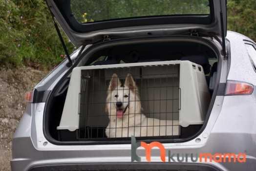 köpeğinizle seyahat etmenin tüyoları