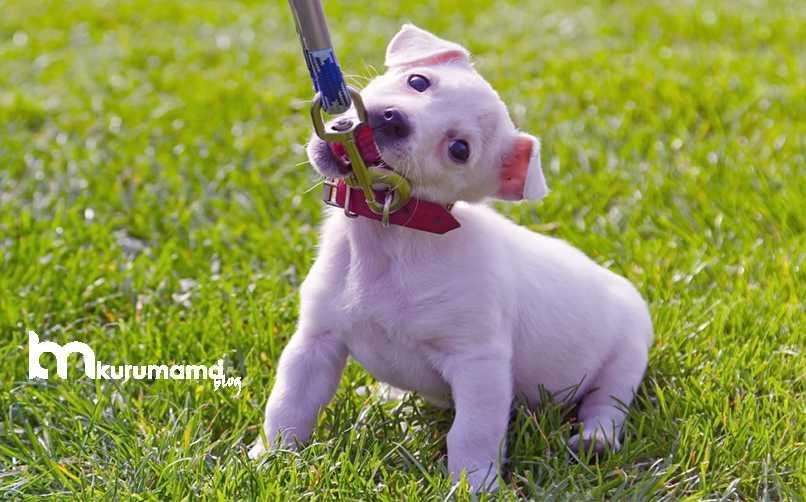Köpek Boyun Tasması Çeşitleri