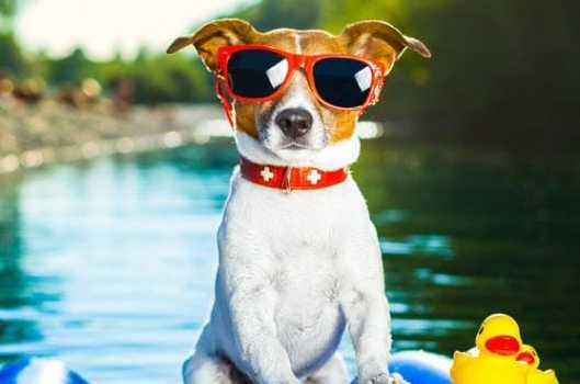 Köpeğiniz İçin Seyahat Bavuluna Koymanız Gerekenler