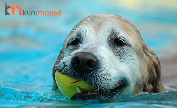 köpekler ve yüzme