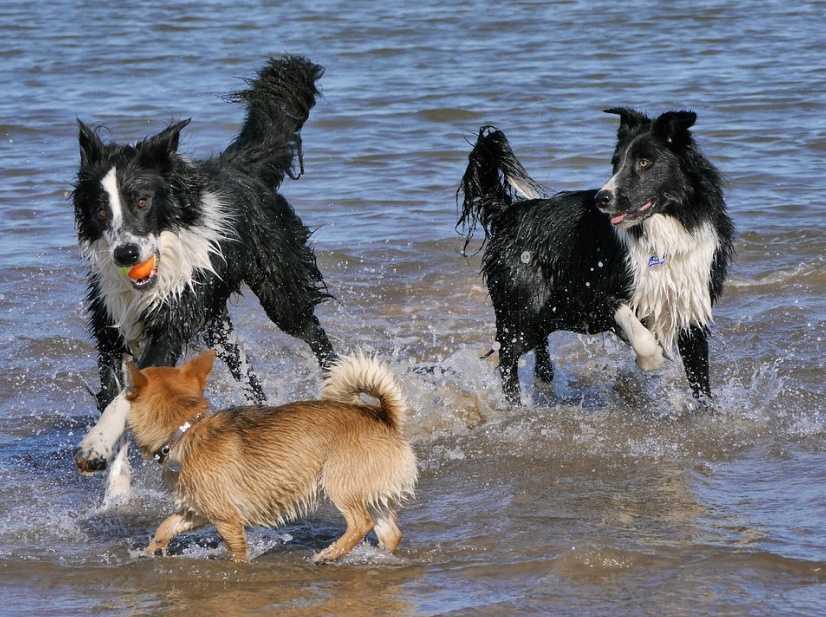 Köpekler deniz ve yüzme