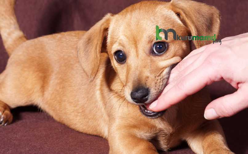 Köpekler Neden Isırır?