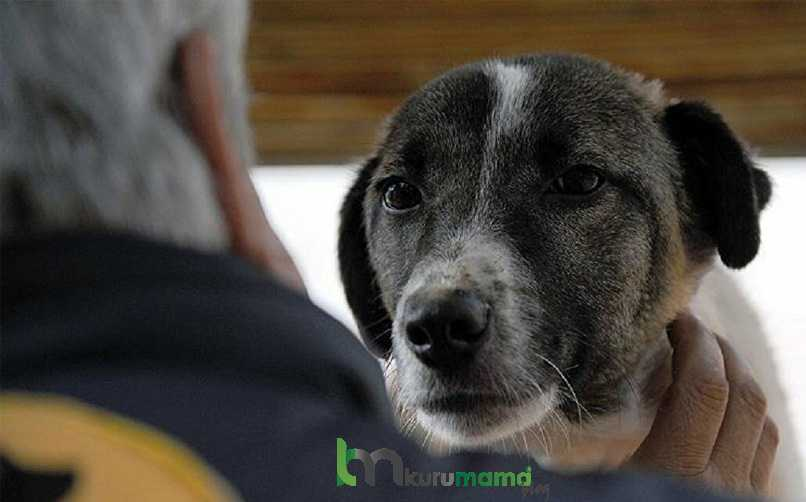 Köpekler Neden Kanser Olur?
