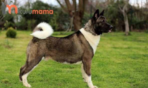 köpeklerde bölge savunması
