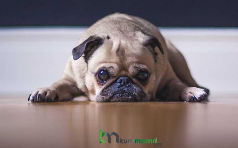 Köpeklerde Kanser Riskini Azaltmak İçin En Etkili İpuçları