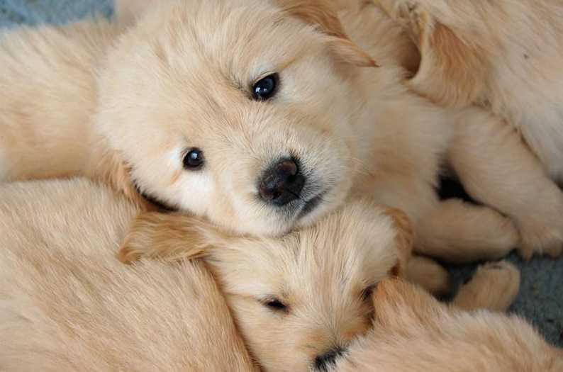 Köpeklerde kanser nasıl fark edilir?