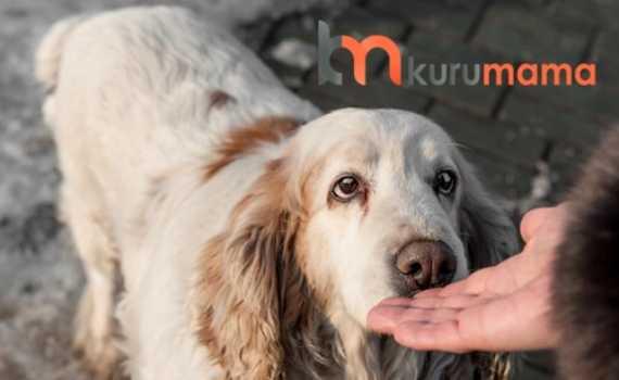 köpeklerde kanser