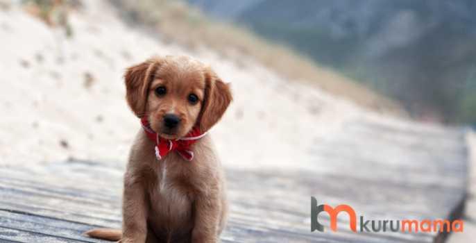 köpeklerde mama seçimi