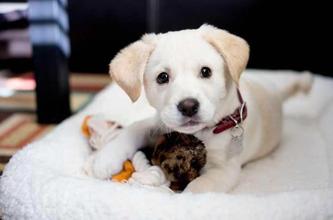 Köpeklerde şişkinliğe dikkat