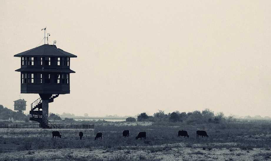 Kuş gözlem evleri