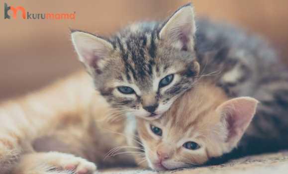 yavru kedilerde ısırma