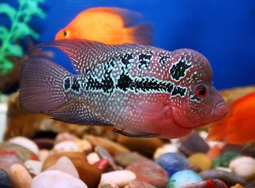 Balıklar için pratik bilgiler