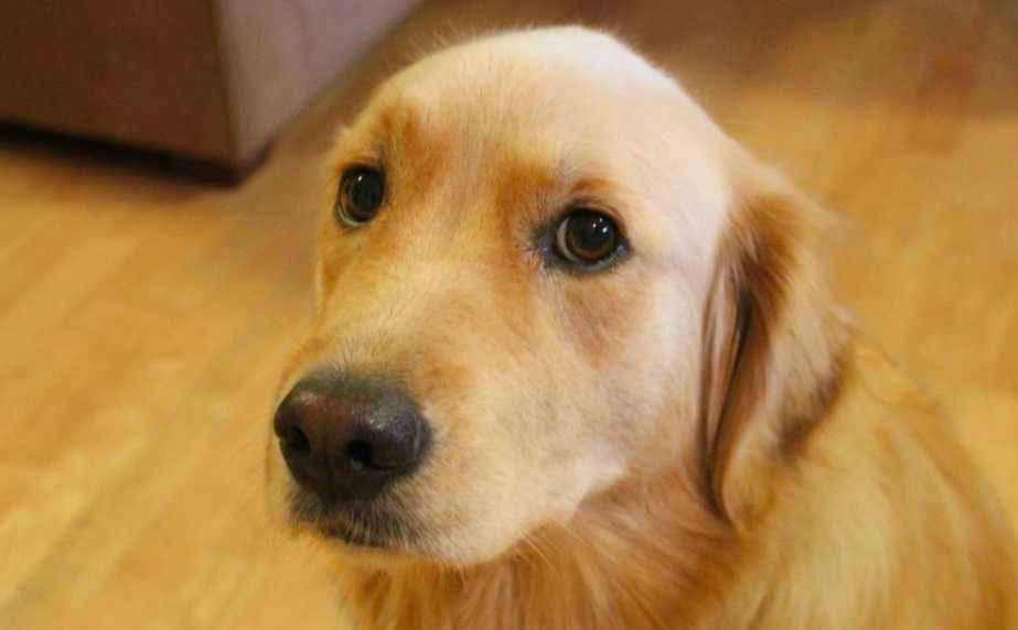 En iyi köpek maması