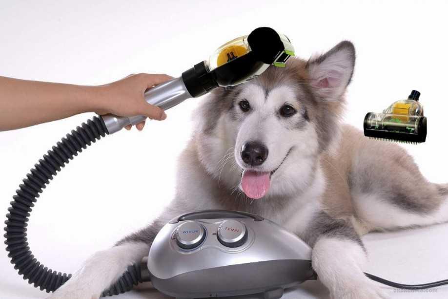 Evcil hayvan hakları