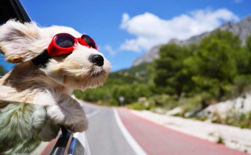 Evcil Hayvanlar Hakkında Bilgi
