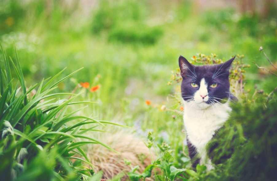 Kedilerin duygularını nasıl anlarız?