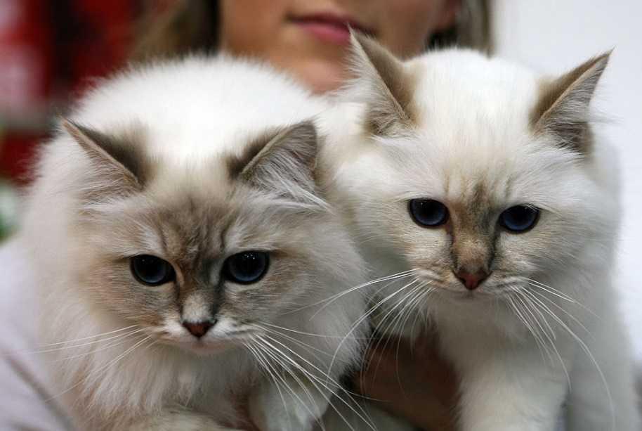 Kedilerin insanlar üzerindeki etkileri
