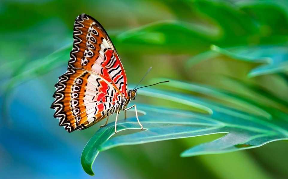 Kelebekler, kokuyu ayaklarından alırlar.