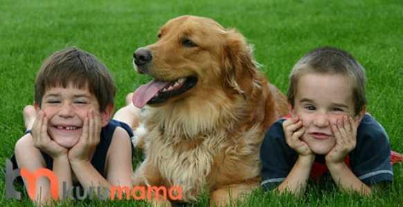 köpek beslemenin faydaları