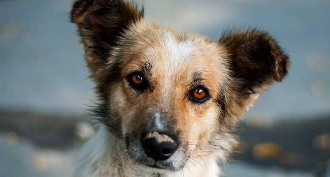 Köpek maması seçerken dikkat edilmesi gerekenler