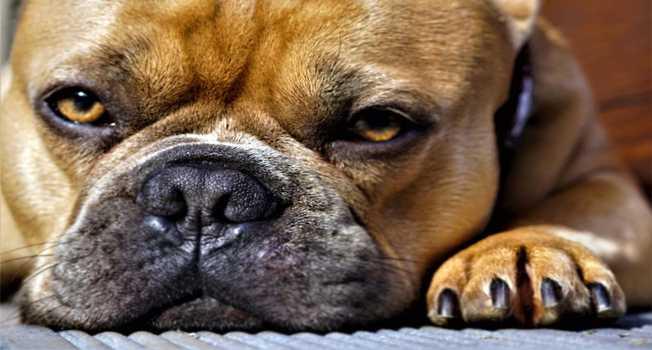 Köpeklerin Tırnakları Kesilirken Dikkat Edilmesi Gerekenler