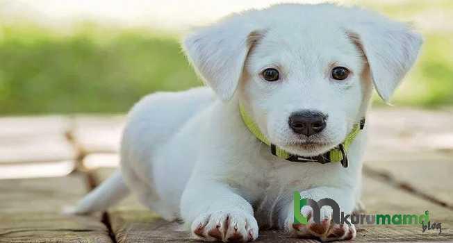 Köpekler ne yer