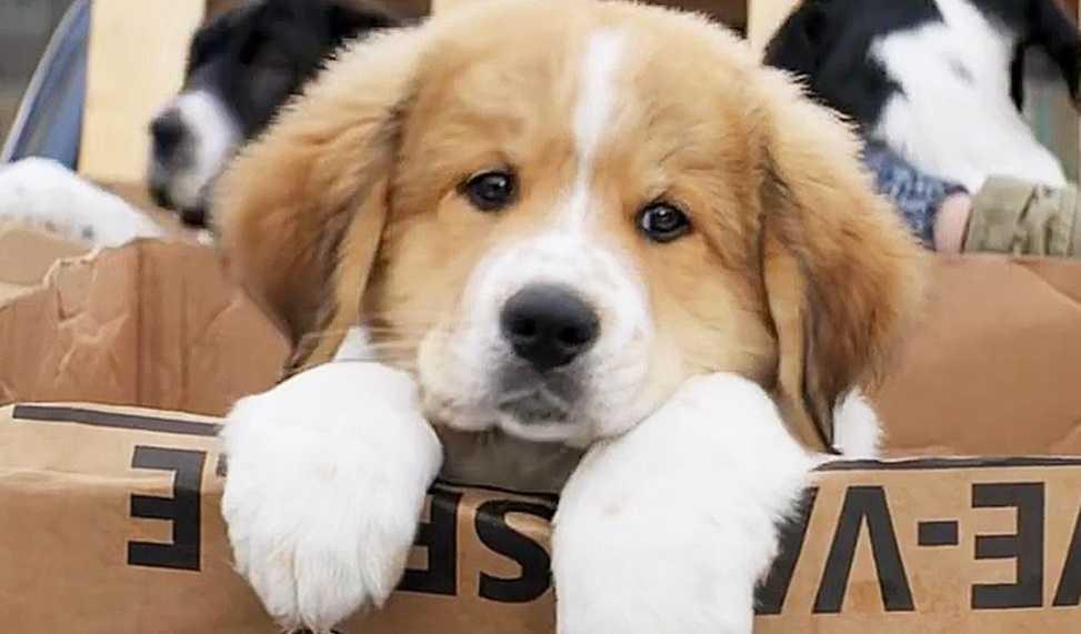 Köpeklerin burun izleri birbirinden farklıdır
