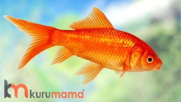 Sağlıklı balık bakmanın kuralları