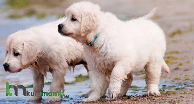 Yaşına göre köpek beslemesi