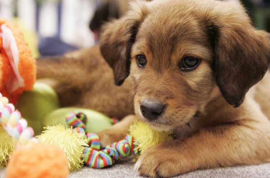 Yavru köpekler hakkında bilmeniz gerekenler