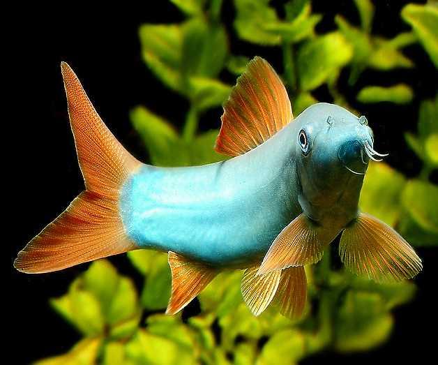 Deniz akvaryumunda hangi balıklar beslenebilir?