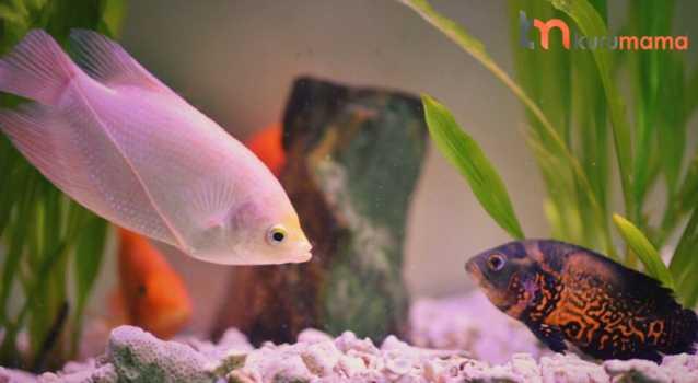 sağlıklı balık ipuçları