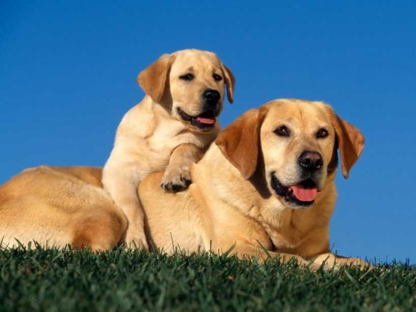 Dişi köpek mi yoksa erkek köpek mi alalım?