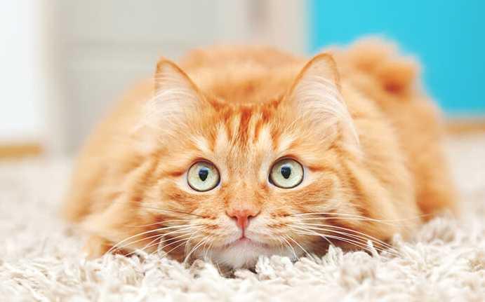 Popüler kedi maması markaları
