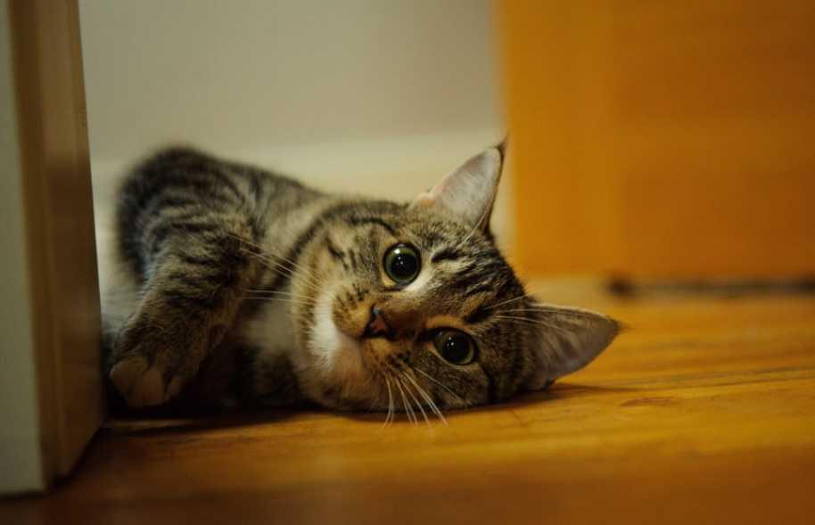 Kedilerin zehirlendiği nasıl anlaşılabilir?