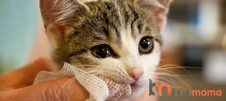 kedilerde diş bakımı