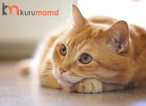 kedilerde kanser türleri