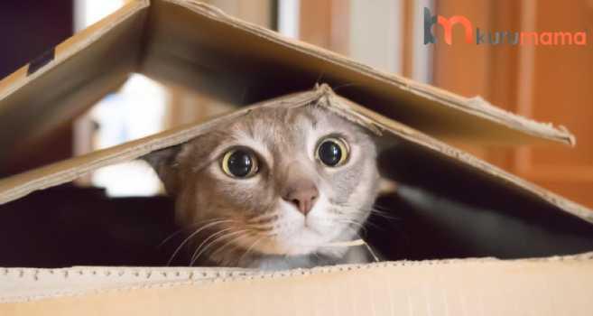 kediler için oyuncak seçimi