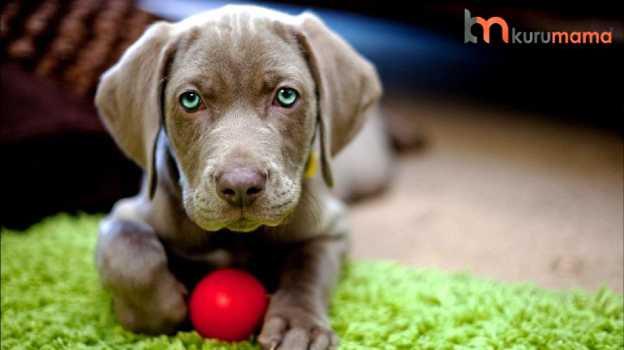 köpekler için tehlikeli oyuncaklar